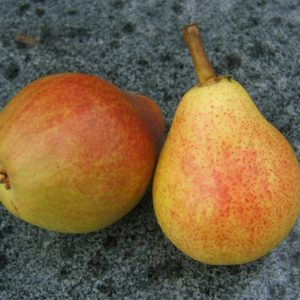 Pyrus Clapps Liebling